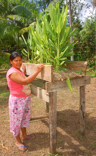 Bora artisan with guisador in planter box made with help from CACE at Brillo Nuevo. Photo by Campbell Plowden/Center for Amazon Community Ecology