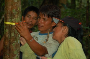 Yully Rojas measuring copal tree with Maijuna team.  Photo by Campbell Plowden/Center for Amazon Community Ecology