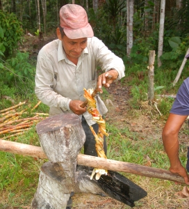 Miguel squeezing sugar cane