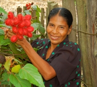 Peruvian artisan Dora Tangoa from Jenaro Herrera holding achiote fruit pods used to dye chambira palm fiber. Photo by Campbell Plowden/Center for Amazon Community Ecology