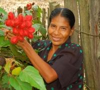 Peruvian artisan Dora Tangoa from Jenaro Herrera holding achiote fruit pods used to dye chambira palm fiber. Photo by Campbell Plowden/Center for Amazon Community Ecology