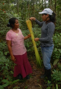 CACE intern measuring chambira yield with Bora artisan at Brillo Nuevo. Photo by Campbell Plowden/CACE