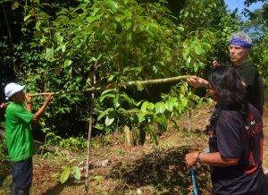 Campbell and Bora team members measuring the width of a rosewood tree at Brillo Nuevo. Photo by Tulio Davila/Center for Amazon Community Ecology