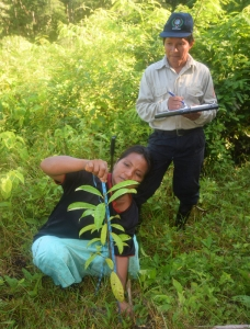 Measuring rosewood tree seedling height at Brillo Nuevo. Photo by Campbell Plowden/Center for Amazon Community Ecology