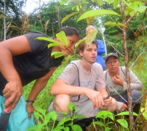 Robin van Loon discussing pruning strategy with Bora team at Brillo Nuevo. Photo by Campbell Plowden/Center for Amazon Community Ecology