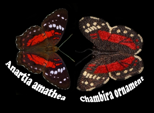 Scarlet peacock butterfly (Anartia amathea) and chambira ornament. Photo by Campbell Plowden/Center for Amazon Community Ecology.