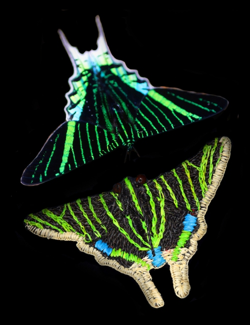 Uranid moth and ornament. Photo by Campbell Plowden/Center for Amazon Community Ecology.